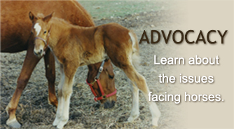 Equine Advocates Advocacy Issues